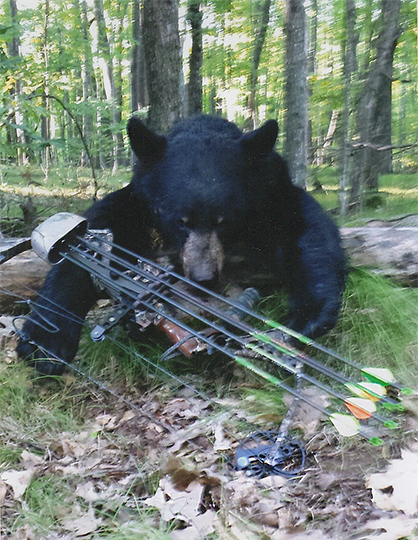Wisconsin Black Bear Hunting Guide - Outback Guide Service of Bayfield County